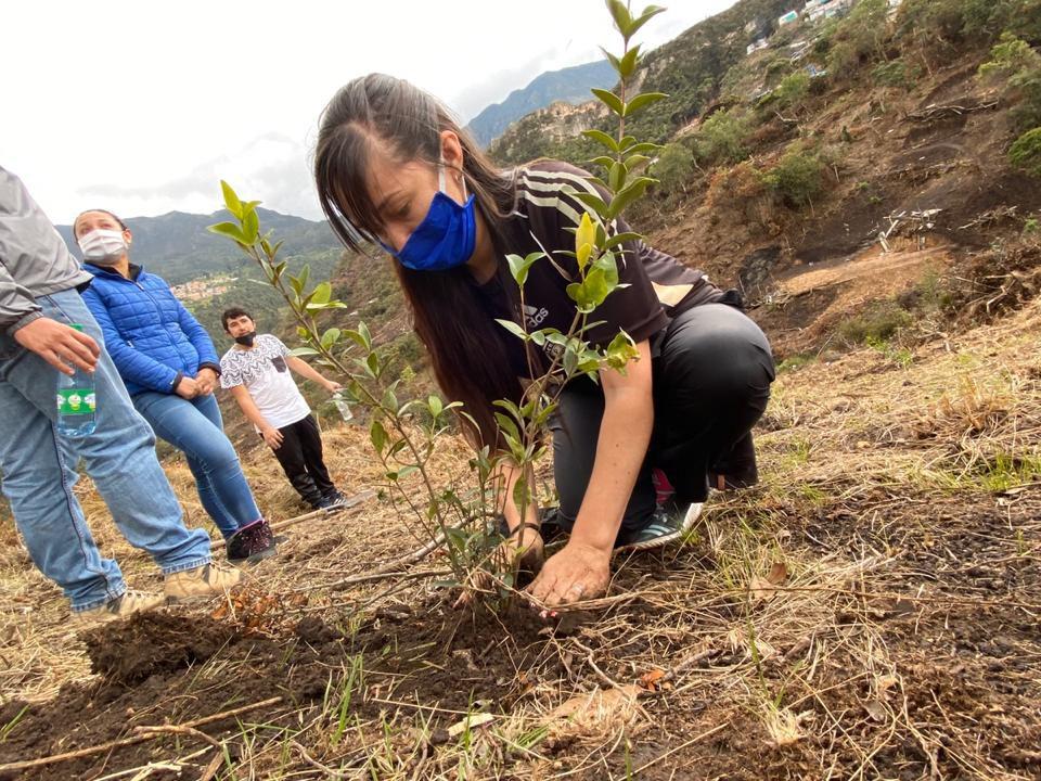 Plantación de árboles en área afectada en Entrenubes. Foto: Secretaría de Ambiente