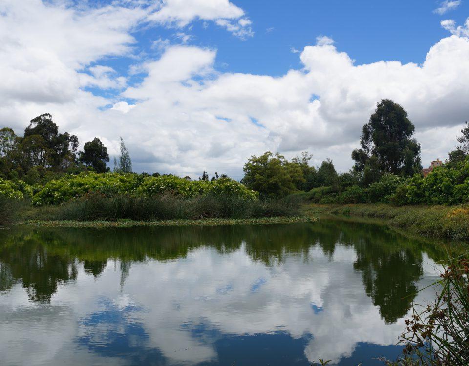 Humedal Córdoba, ubicado en la localidad de Suba. Foto: Secretaría de Ambiente.
