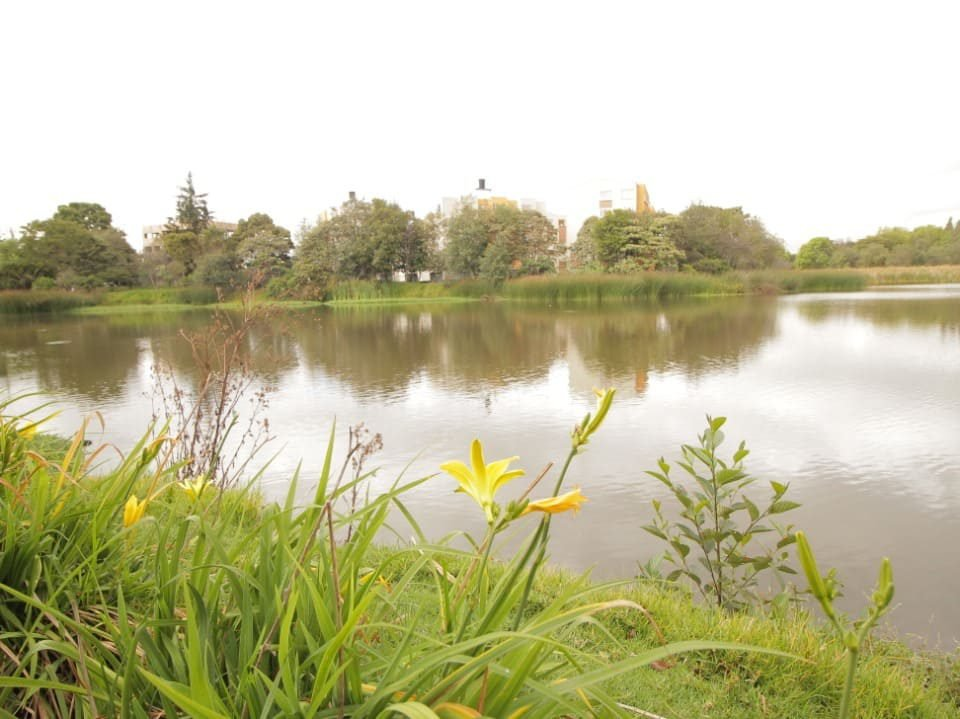 El humedal Santa María del Lago tiene un espejo de agua que ayuda a las aves a ubicarse. Foto: Comunicaciones Secretaría de Ambiente