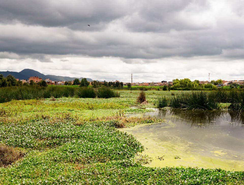 El humedal Tibanica tiene una extensión de 28,8 hectáreas. Es el hábitat de diversas especies de fauna. Foto: Comunicaciones de la Secretaría de Ambiente.