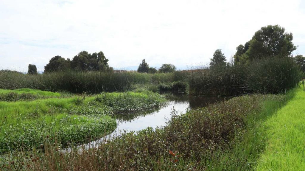 Los humedales actúan como esponjas. En época de lluvia almacenan el agua y en sequía la liberan. Foto: Comunicaciones, Secretaría de Ambiente.