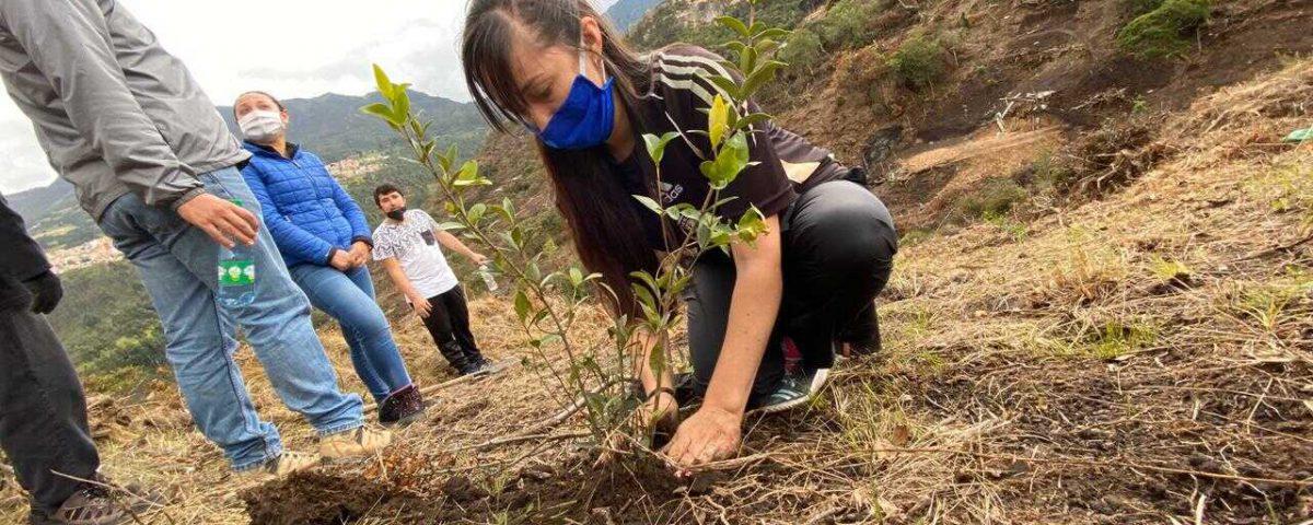 Más de 3.000 árboles han sido plantados en Entrenubes con el objetivo de iniciar los procesos de restauración. Foto: Comunicaciones, Secretaría de Ambiente.