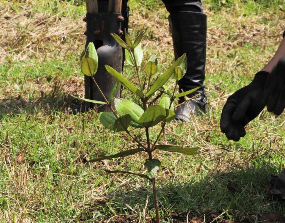 Plantamos 163 árboles en el Parque Entrenubes. Foto: Comunicaciones, Secretaría de Ambiente.