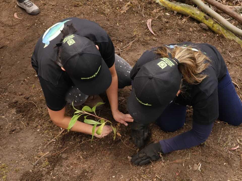 Más de 43.000 árboles han sido plantados en diferentes ecosistemas de la ciudad. Foto: Comunicaciones Secretaría de Ambiente.